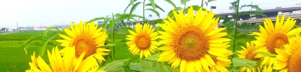 京滋有機農業研究会